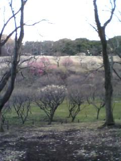 森林公園の梅林