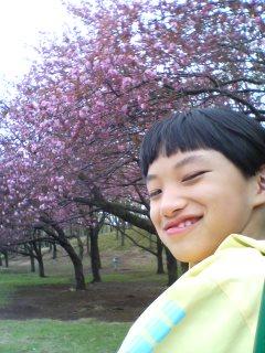 森林公園の八重桜