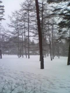 吹雪いてます…